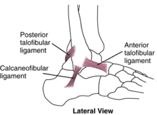 The Ankle Joint - Treat The Athlete